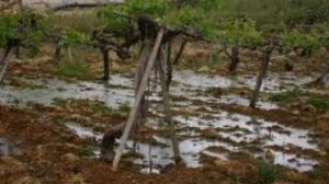 Jews dumped sewage on Palestinian cropland