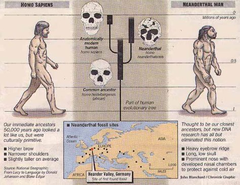 Neanderthal table