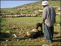 farmers examine sheep - maybe poisoned by violent jews