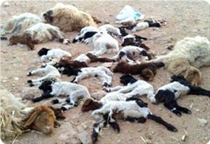 Image result for zionists poison palestinian livestock