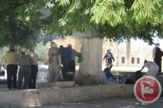 al-Aqsa - elderly people waiting at trees to not get shot. Ma'an