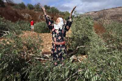 Palestinian lady cries at Jewish destruction of family's Olive trees 400