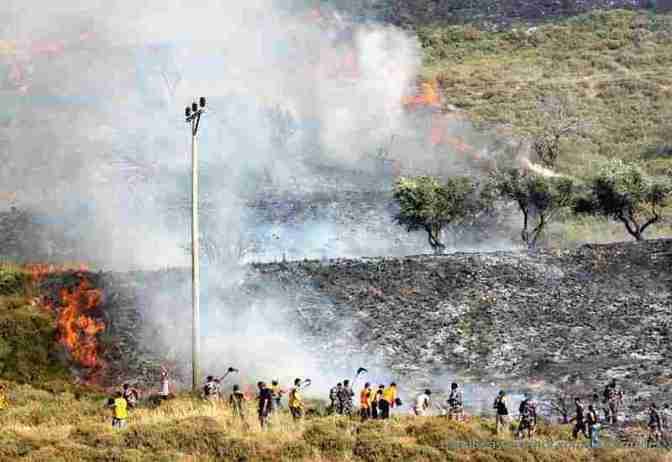 Violent Jewish Settler Colonists, IOF soldiers set Palestinian land on fire