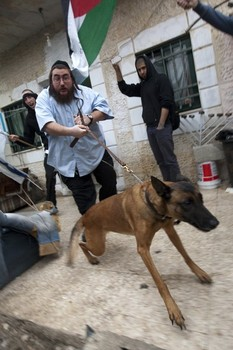 Violent Jewish Settler Yaakov Fauci siccs attack dog on Palestinians