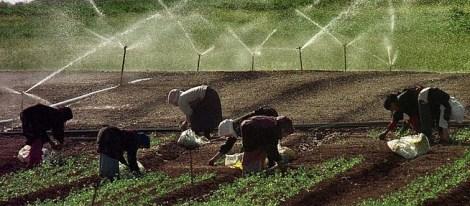 Ladies harvesting agriculture
