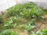 Producein greenhouse