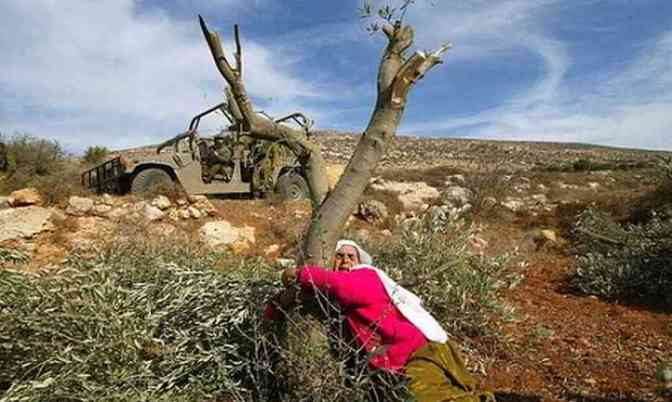 Palestinian lady hugs Olive tree destroyed by Jews