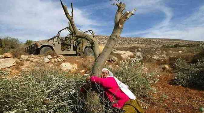 Violent Jewish settler colonists uproot trees near Ramallah